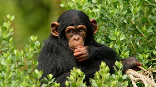 Maymun haqida sherlar